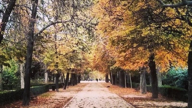UGT denuncia el insuficiente mantenimiento de los parques y jardines públicos del Ayuntamiento de Madrid